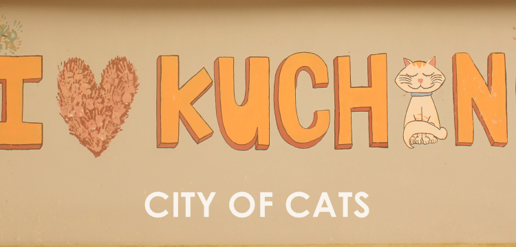 slideshow-city-of-cats